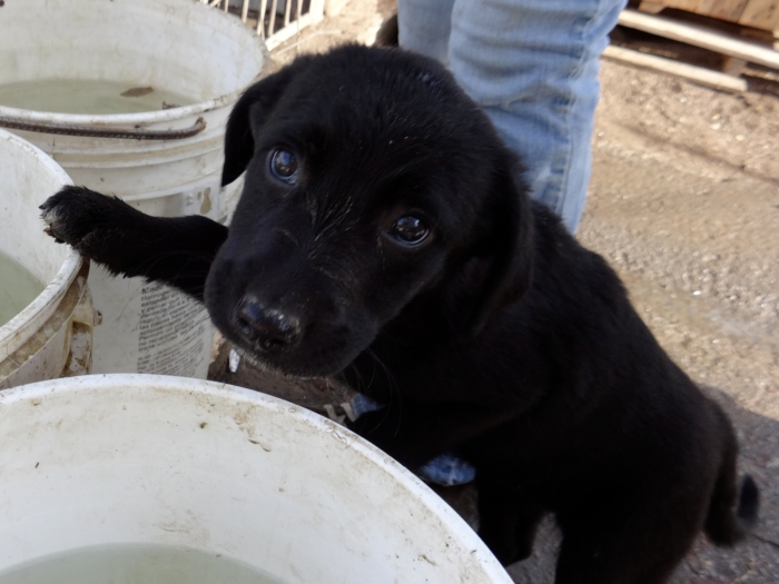 This is one of the adorable puppies. I named her Medianoche!
