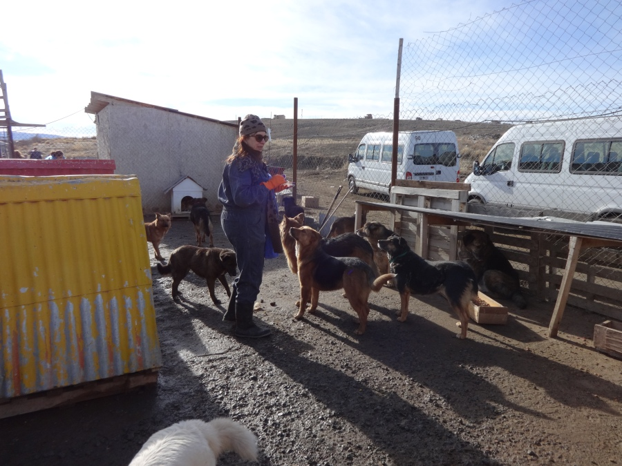 This is my professor surrounded by only a few of the dogs that live at the shelter—there are over 100!