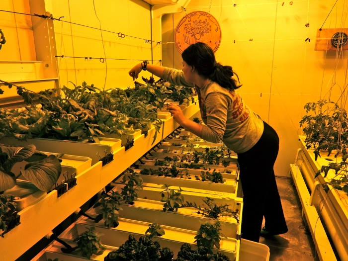 Here's Marissa, and one of her responsibilities is to make sure that the big plants are harvested and the little plants can fill in any empty spaces.