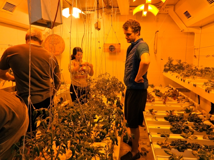 And here's just a better picture of the inside of the growth chamber. Tomatoes growing in the center—these plants are much larger now!