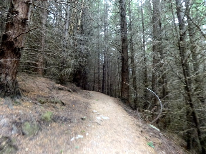 Sketchy Queenstown Hill forest. Also lots of little red mushrooms that look like something out of Alice in Wonderland.