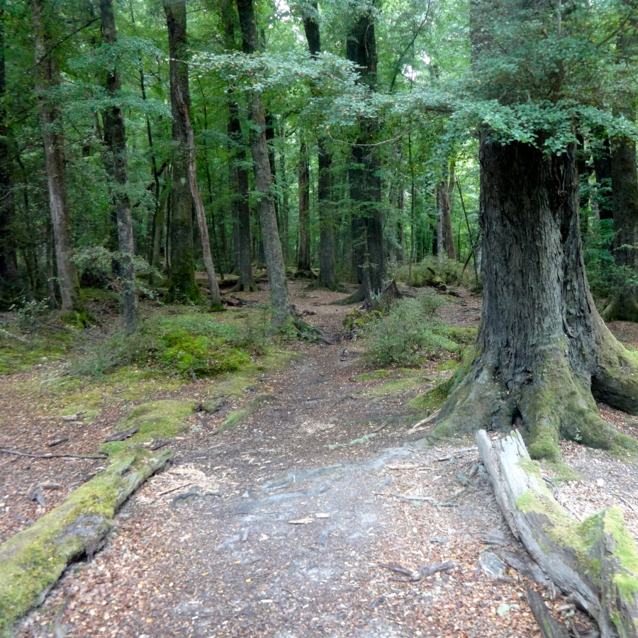 Lothlorien-esque forests!